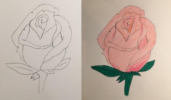 Dessin d'une rose de couleur rose